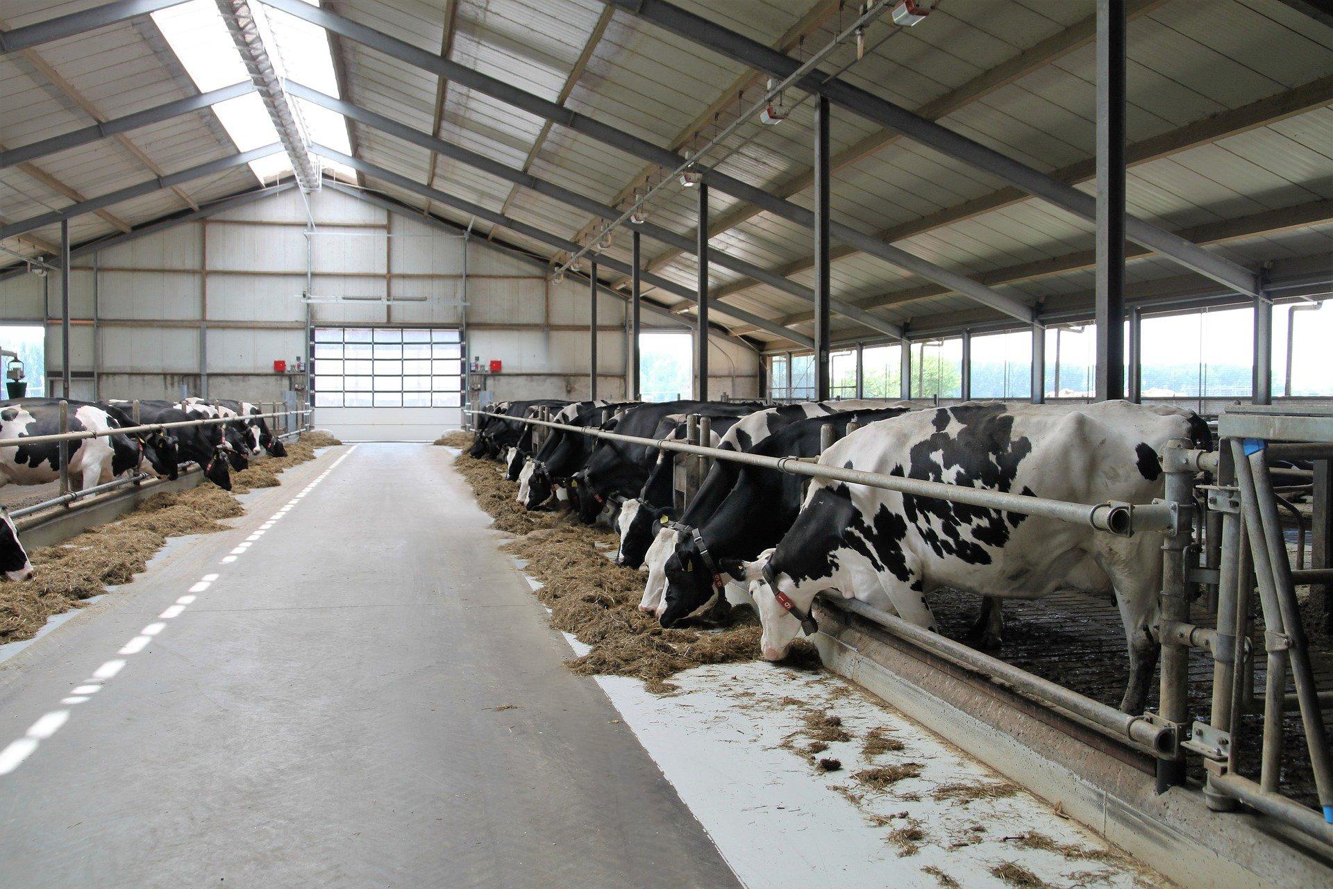 01 Pulizia Azienda agricola Farm