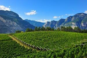 Vigneto nelle valli del Trentino